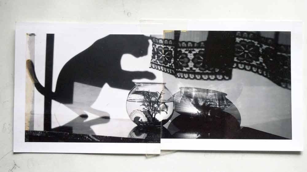 BH-Goldfish-Polaroid-1050113-sprks