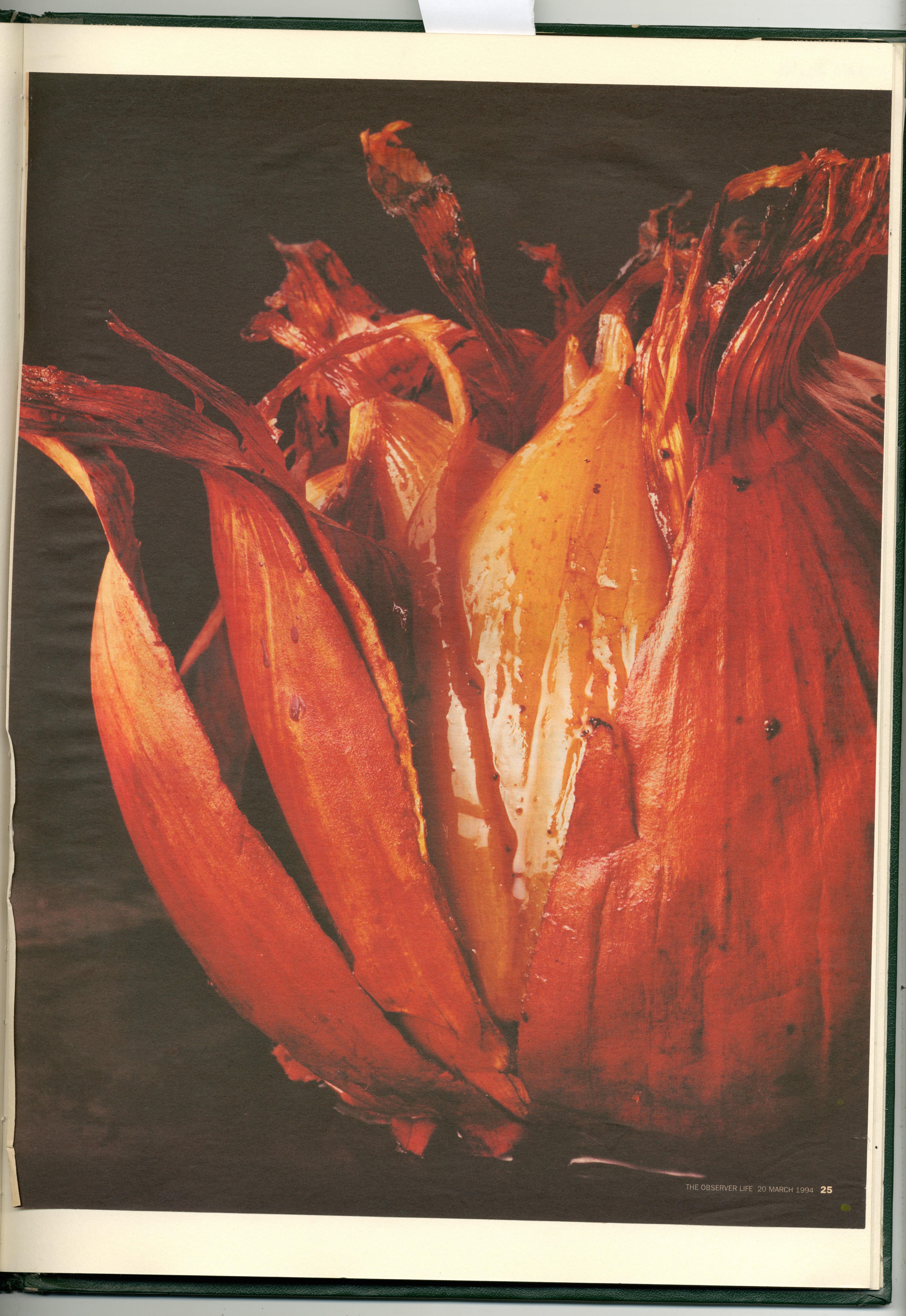 Dave Dye:Onion