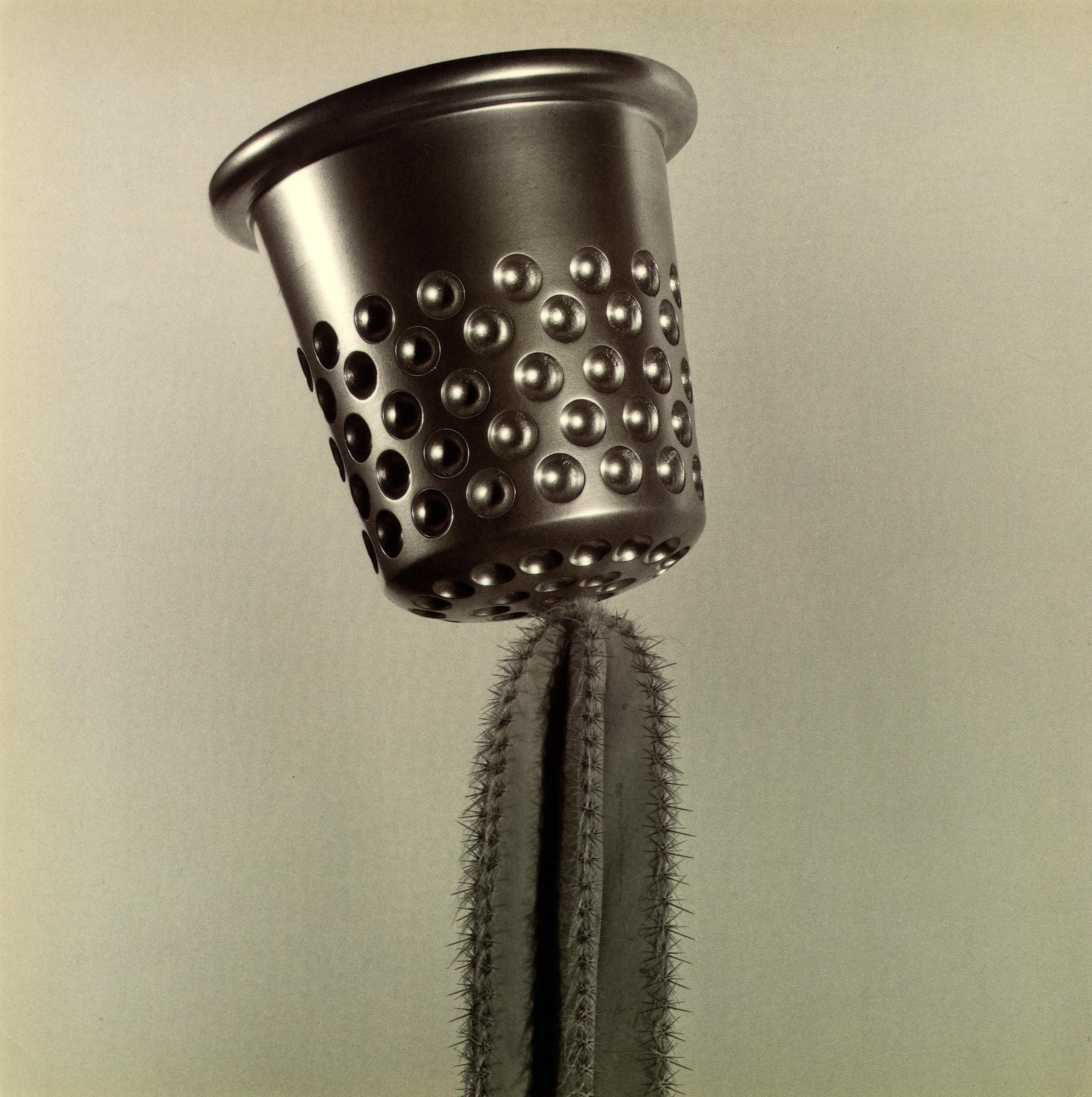 Brian Griffin, 'Cactus'-01