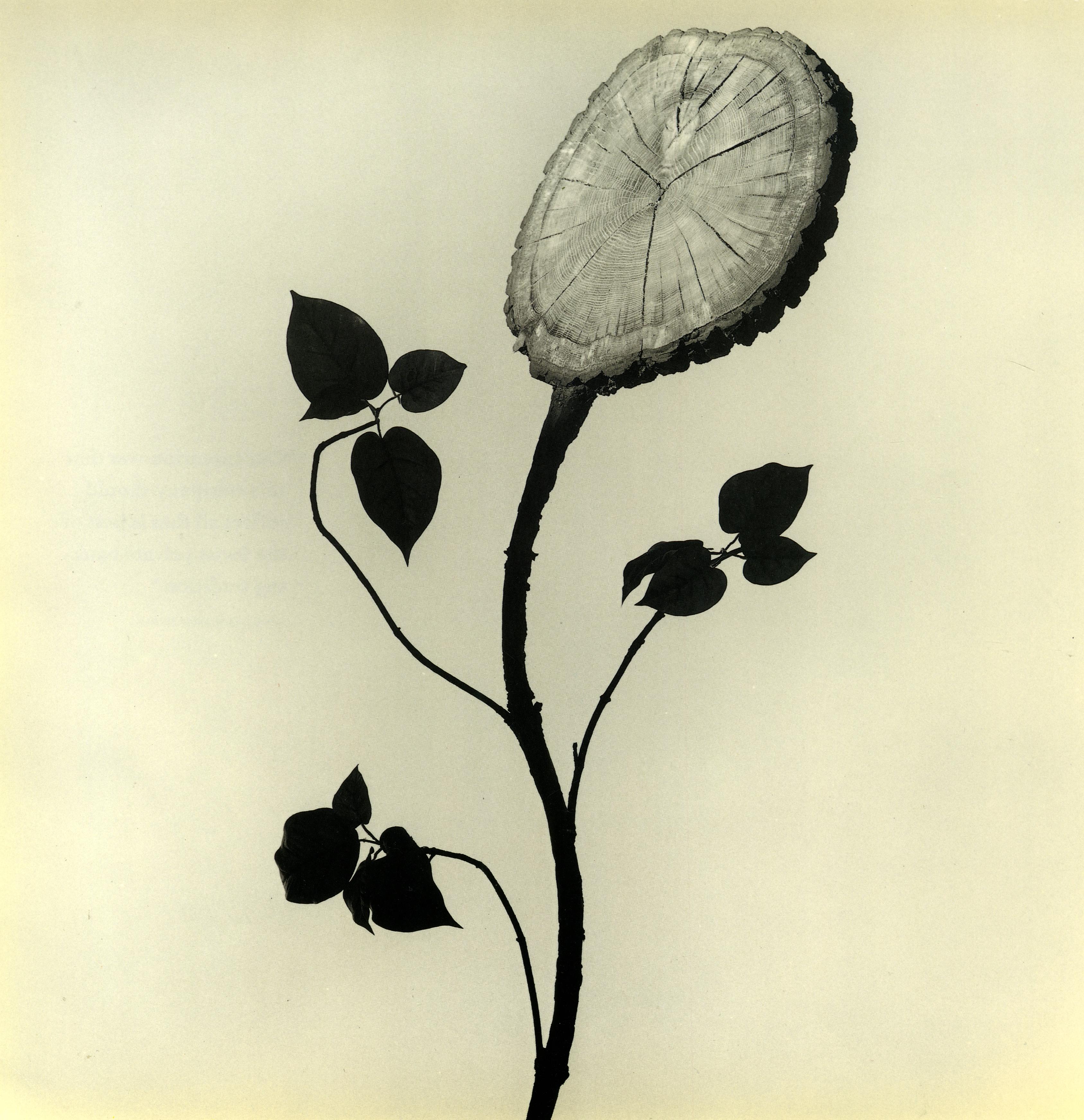 Brian Griffin, 'Flower'-01