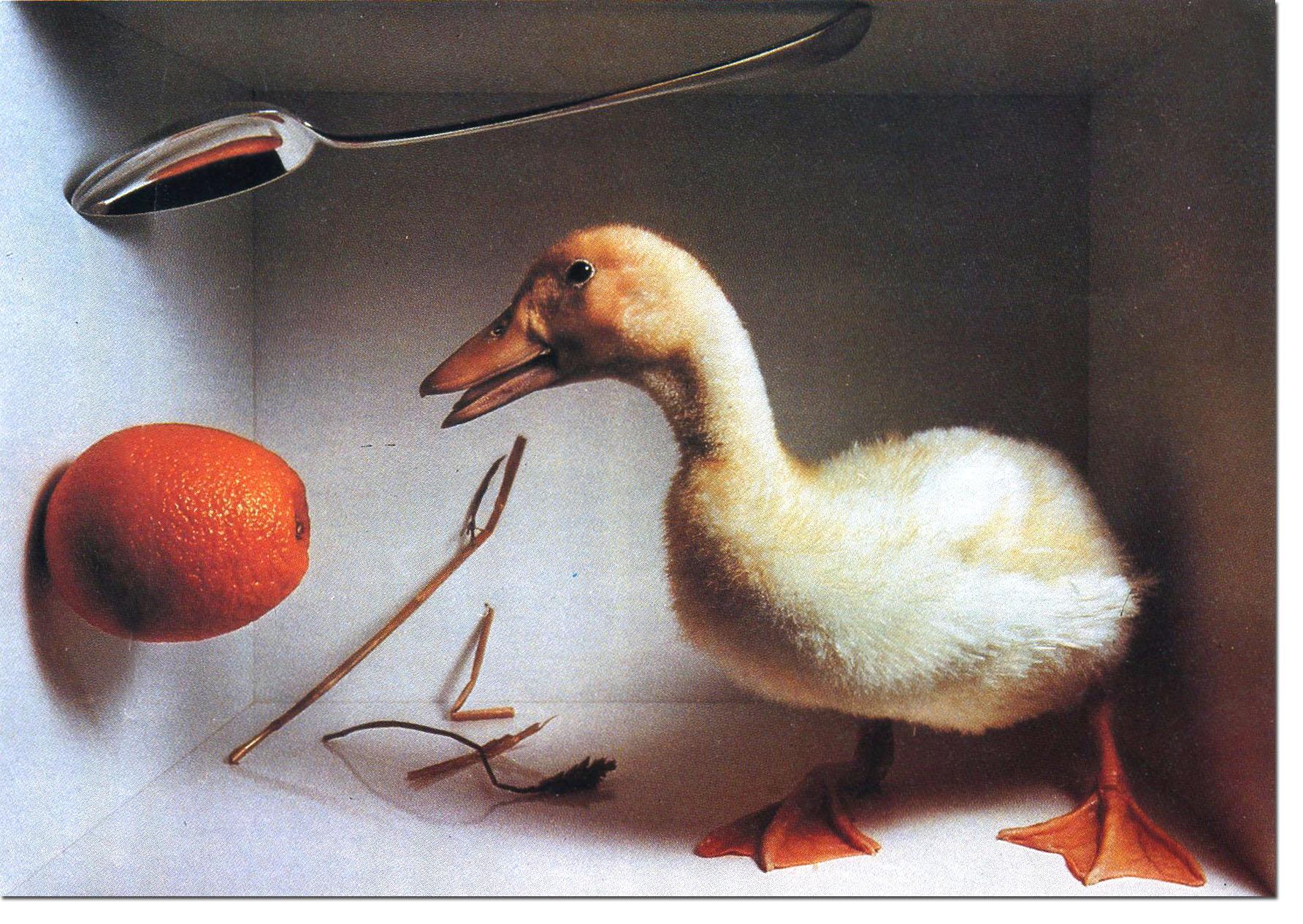 Lester Bookbinder - Orange:Duck