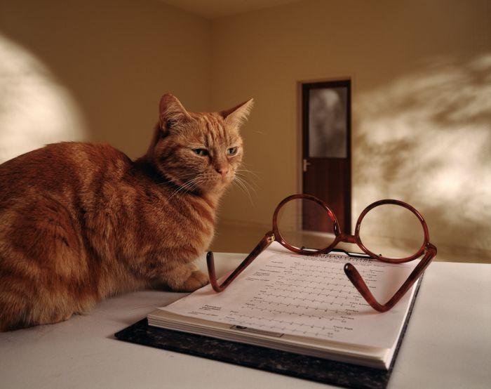 Rolph Gobits - Cat & Glasses