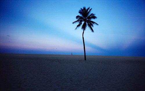 Rolph Gobits - Tree Palm