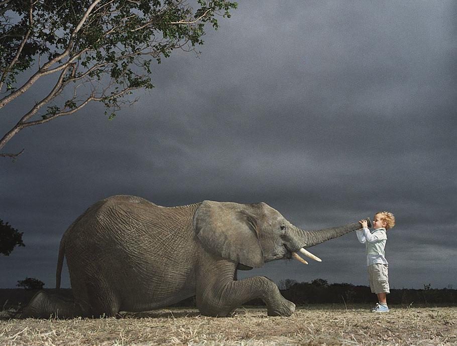 Tim Flach - Elephant Boy