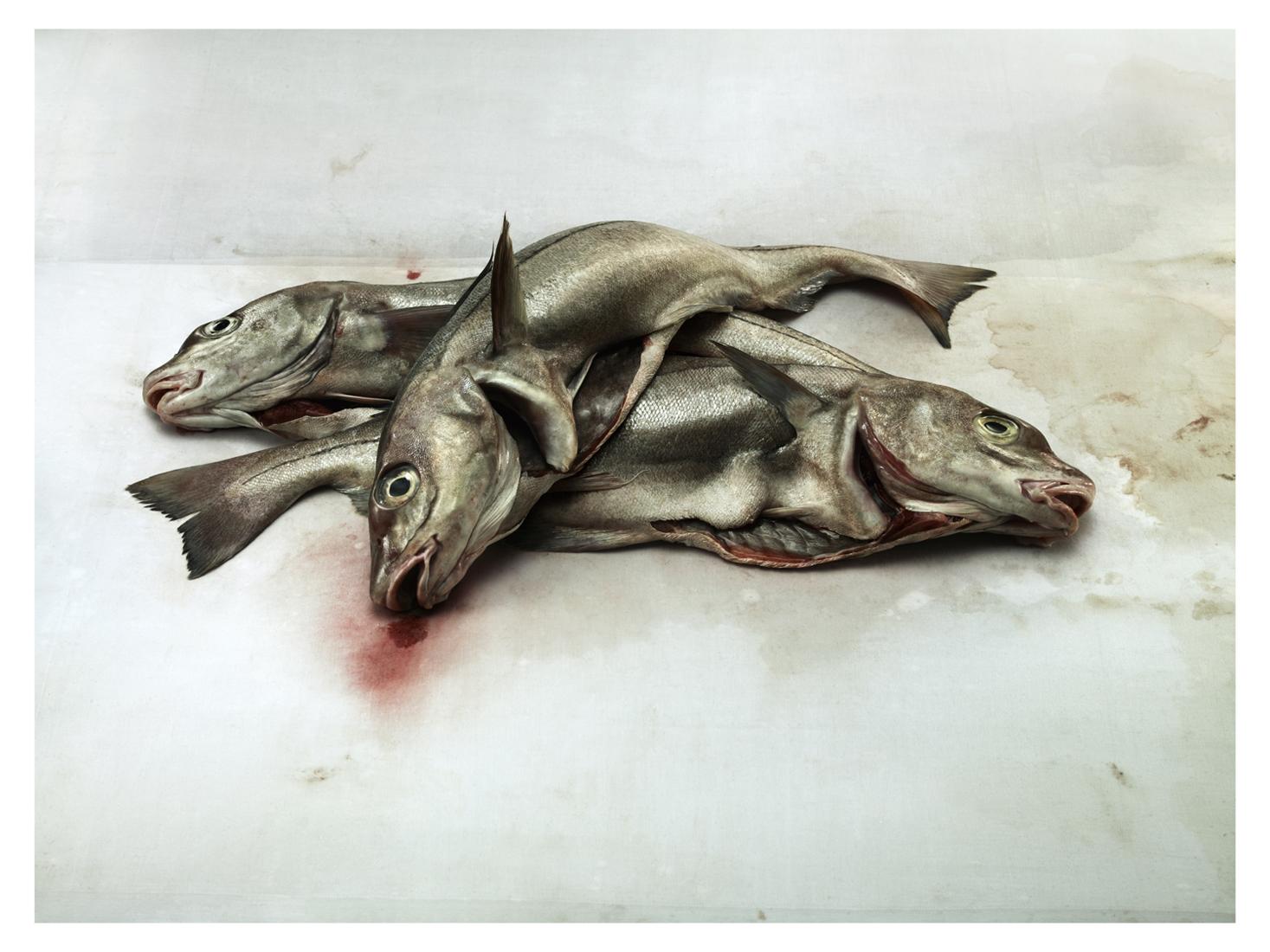 Giles Revell - Fish 2, Dave Dye