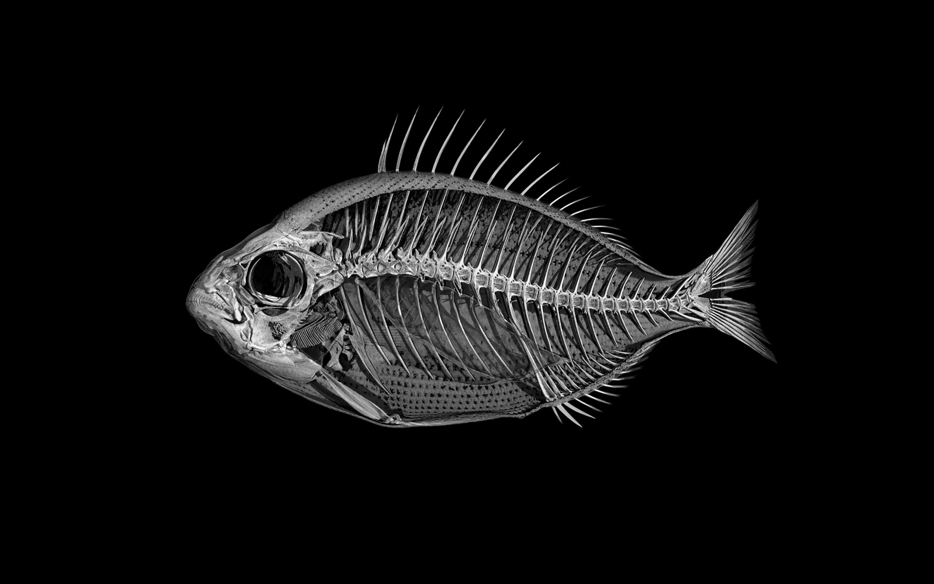 Giles Revell - Fish, Dave Dye