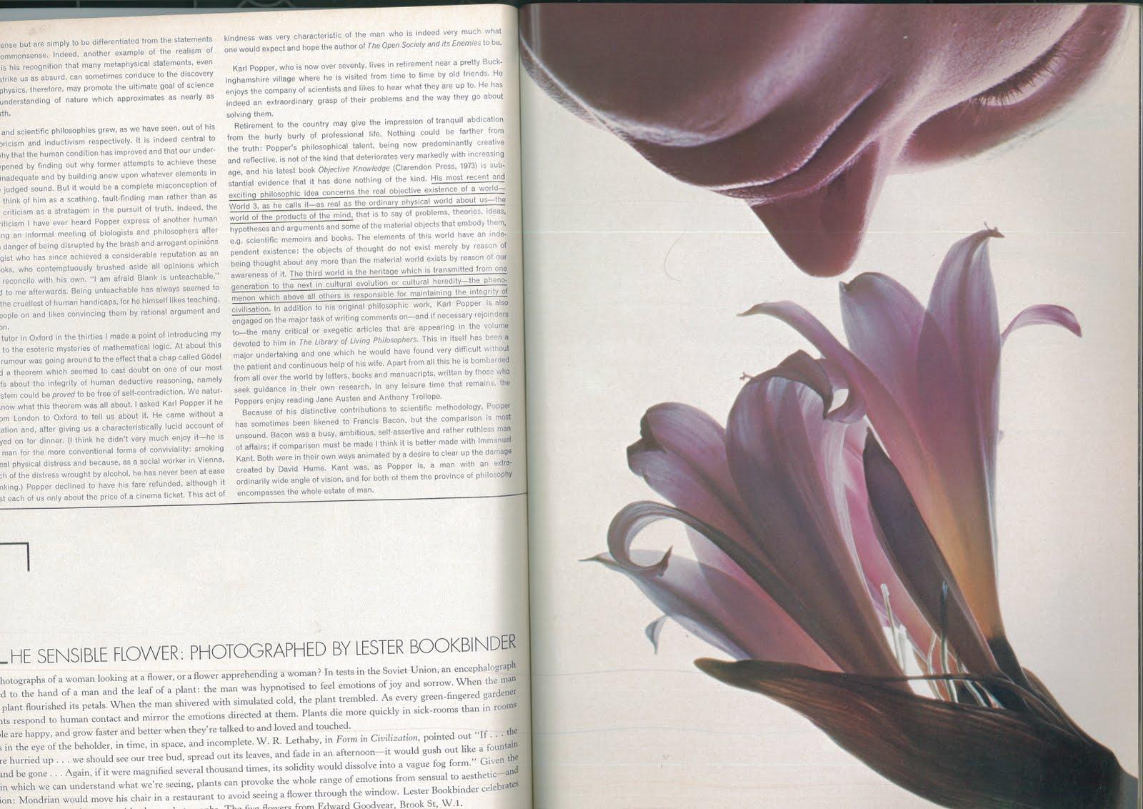 Lester Bookbinder - Vogue