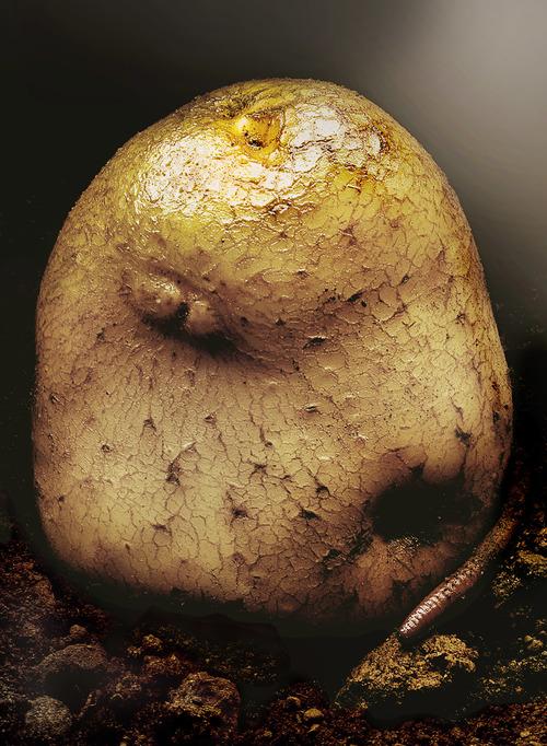 Phil marco 'Potato'