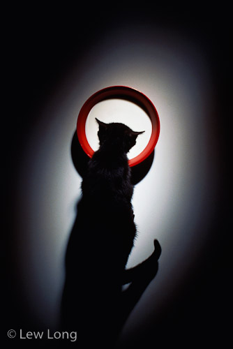 'Cat' Lew Long.jpg