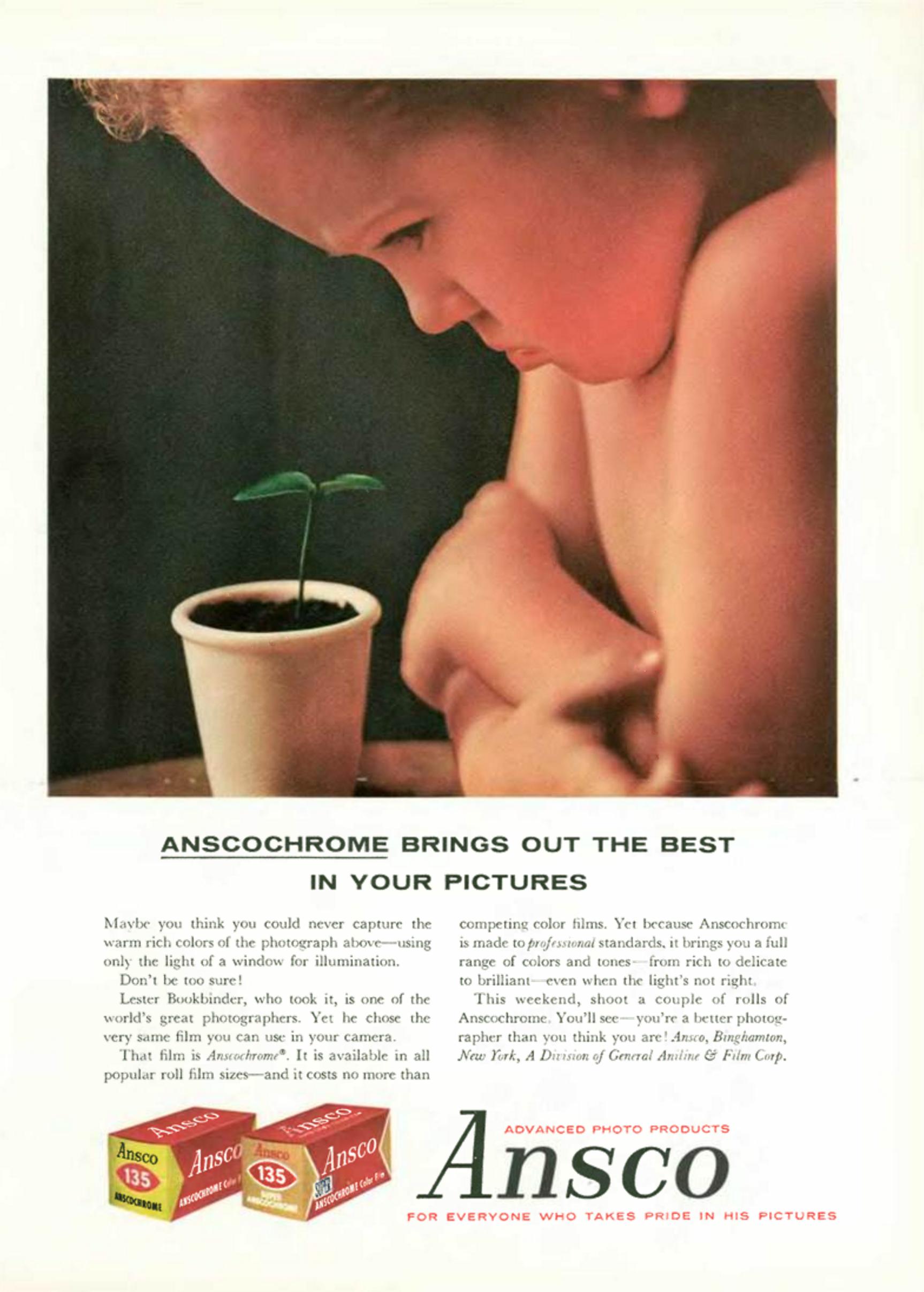 Ansco 'Plant', Lester Bookbinder.png