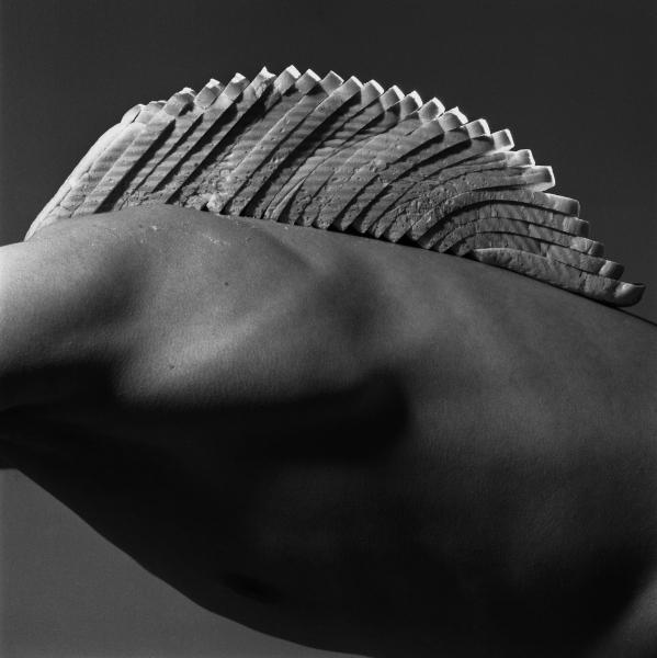'Bread-back Mountain' Brian Griffin